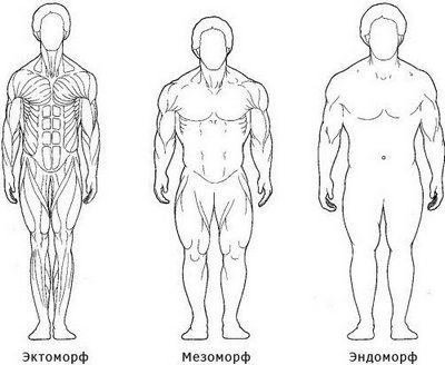 Тип телосложения: эктоморф, мезоморф, эндоморф