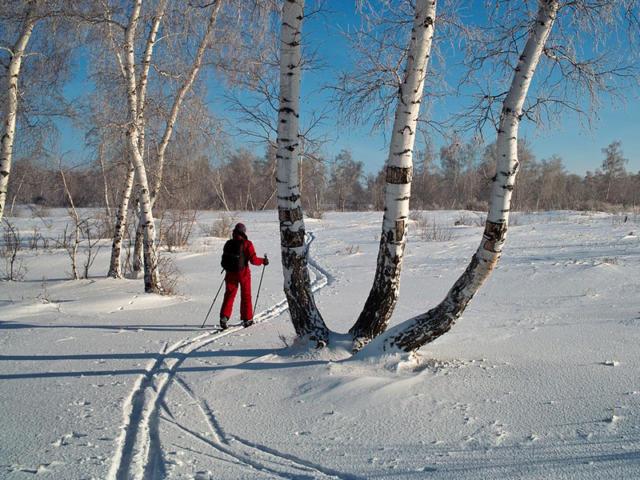 Польза лыжных прогулок для здоровья