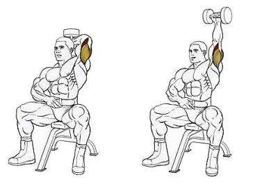 Упражнение на трицепс: разгибание рук из-за головы