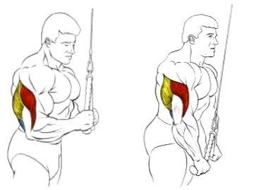 Упражнение на трицепс: разгибание рук на верхнем блоке в положении стоя