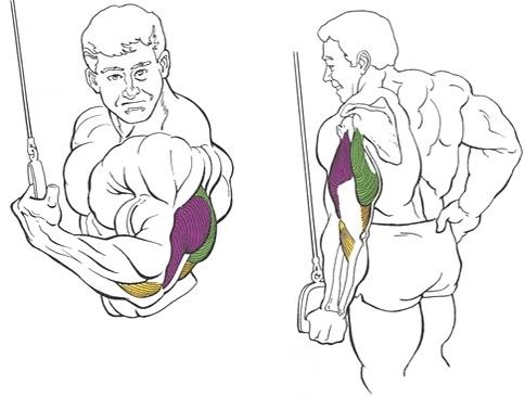 Упражнение на трицепс: разгибание одной руки на верхнем блоке в положении стоя