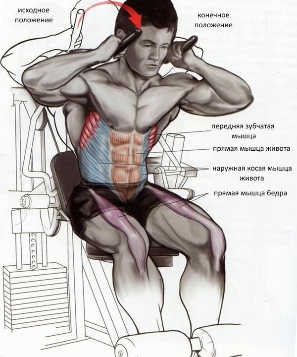 Упражнение для верхнего пресса - скручивание на тренажере