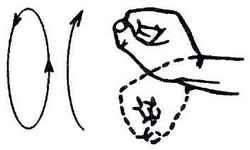 Как делать зарядку по утрам: вращательные движения кулаками